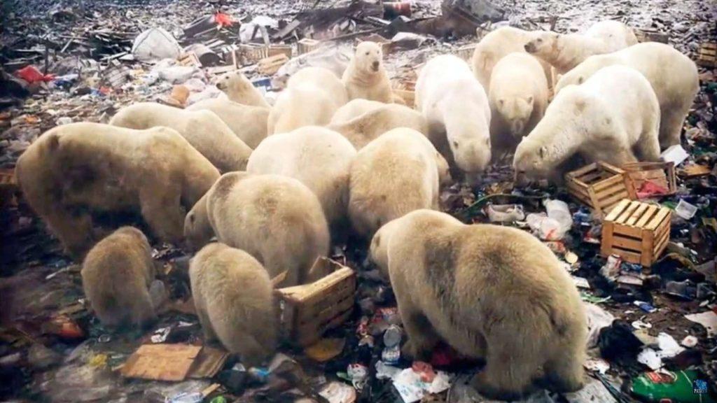 severni medvedi